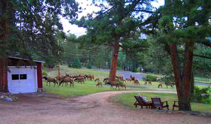 See elk and other wildlife from Twin Owls House